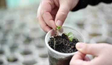 Scientific studies Chilean native plants to restore volcanic soils