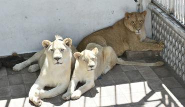 leones cdmx