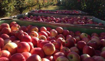 Brasil anunció que deja de comprar manzanas y peras de Argentina