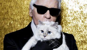 Choupette, la gata influencer de Karl Lagerfeld que heredará su fortuna