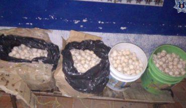 Detienen a mujer que viajaba en un autobús con 3 mil huevos de tortuga