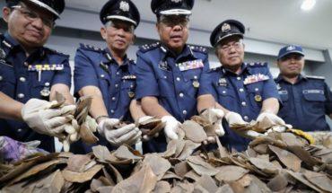 Grupo: Malasia incauta 30 toneladas de pangolines, derivados