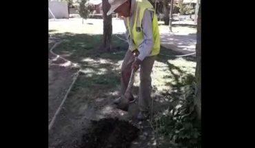 Hombre de 100 años que trabaja arreglando parques recibe $122 mil de pensión
