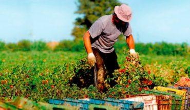 Los desafíos para alcanzar una agricultura sostenible