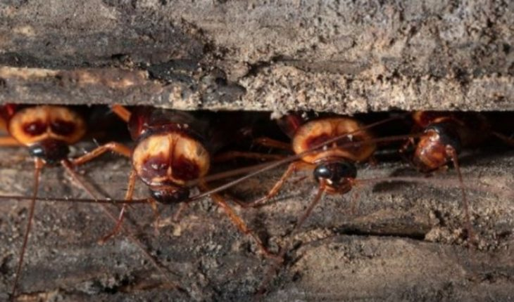 Por qué hay cada vez más cucarachas y moscas al tiempo que se extinguen las mariposas y las abejas