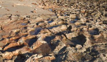 Salvan de inundación, huellas de dinosaurios recién descubiertas