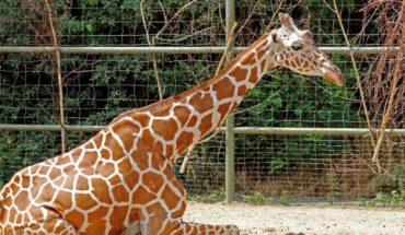 ¿Los zoológicos han salvado animales?