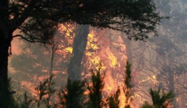 A total of 32 active forest fires affect the southern area