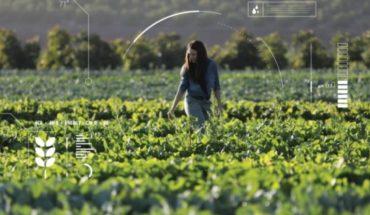 Agricultura inteligente: chilenos crean tecnología para monitorear cultivos desde el celular