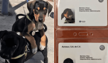 Automotive agency adopts 2 puppies and gives them work