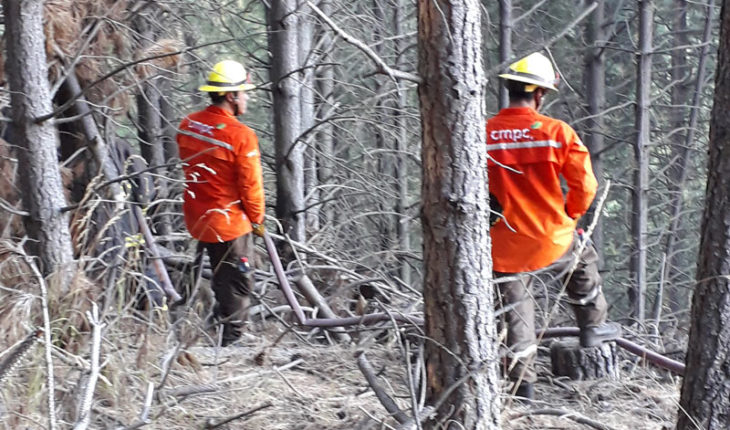 CMPC has fought forest fires in 16 communes between the Maule and Araucanía