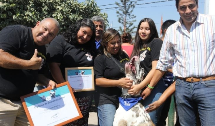 Chile's largest dog was appointed Ambassador of the responsible tenure of the farm