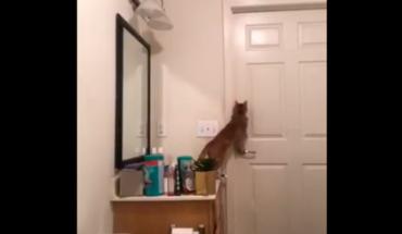Mujer descubre la forma en que su gato escapa del baño (Video)