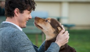 My footprints home: the film that will catch the lovers of pets