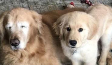 ¿Hay algo más tierno? Conoce a Charlie, el perro ciego que tiene a otro can como guía y compañero