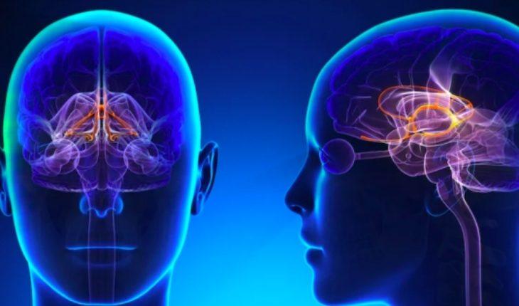 Científicos chilenos investigan el intenso movimiento del cerebro en estado de sueño