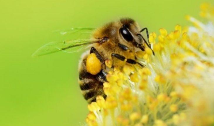 """Crisis ambiental y extinción de los insectos: no solo """"global warming"""""""