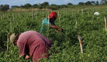 Gobierno desaparece programa de apoyo a jornaleros agrícolas