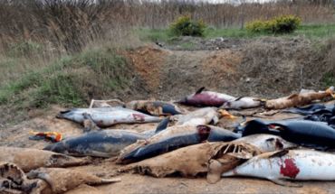 Hallan cientos de delfines mutilados en playa de Francia