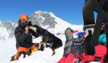 Perrito callejero sigue a un grupo de escaladores y termina escalando el Himalaya