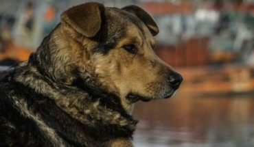 Perros hacen guardia afuera de hospital de Brasil para esperar a su dueño