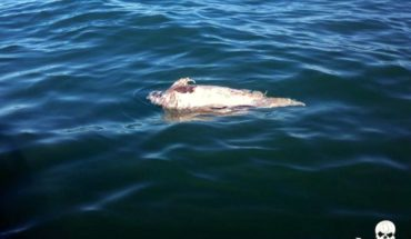 Urgen a regular pesca por vaquita marina
