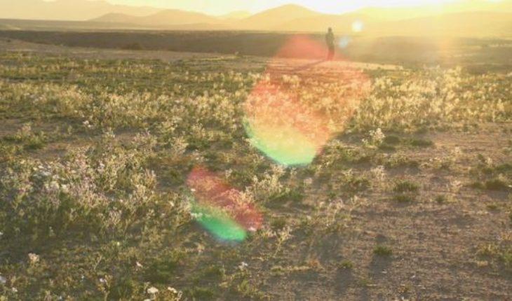 Documental chileno con poética mirada sobre los agricultores y su relación con la tierra gana premio en festival Cinéma du Réel