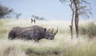Existe un parque en donde se puede asesinar legalmente a cazadores que intenten cazar a rinocerontes