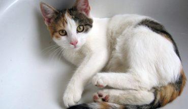 Fin al mito: los gatos sí pueden bañarse… pero con cuidado