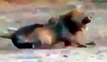 Identifican al cazador que disparó a un león dormido en Zimbaue