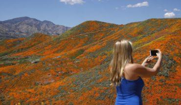Multitudes acuden a ver campos de amapolas de California
