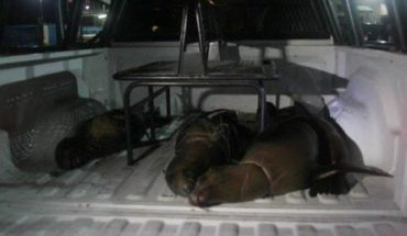 They are 4 sea lions killed in protected area