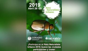 Más de 50 ciudades de México competirán en el desafío mundial: Reto Naturalista Urbano 2019