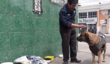 Perrito lleva cuatro días esperando en una esquina a su dueño que murió atropellado