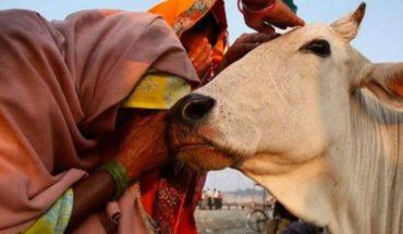Turba asesinó a un cristiano sospechoso de matar a una vaca sagrada en India