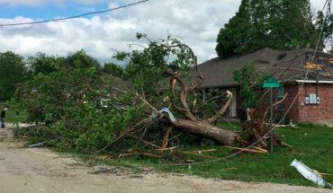 2 niños murieron luego que un árbol cayera sobre el auto en el que viajaban en Estados Unidos