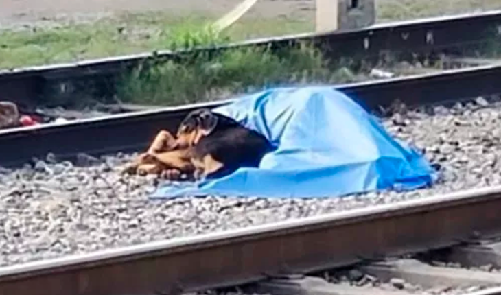 Dog lies next to the body of his master who had died run over by train in NL