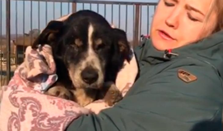 Dueños dan por muerto a su perro, éste revive y regresa a casa (Video)