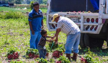 Mexico, the second with more child labour in Latin America