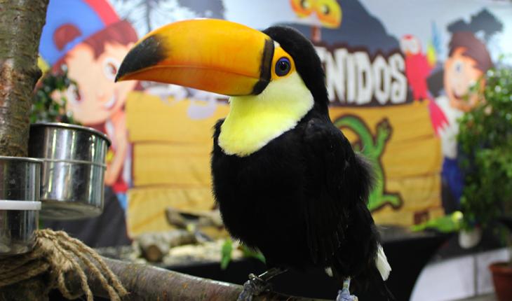 Pet & animal Expo prepares its ninth version