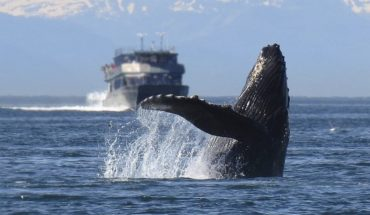 Pregnant whale found dead on European beaches had in his stomach 22 kilos of plastic