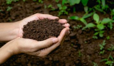 The revolutionary law that allows to convert human corpses into fertilizer for gardens
