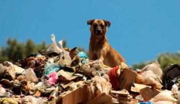 With the ban on single-use plastics, Patzcuaro is role model: Víctor Báez
