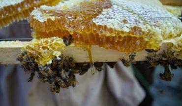 Apicultores brasileños encuentran medio billón de abejas muertas