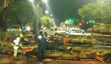 Tormenta golpea Morelia, caen árboles y anuncios espectaculares