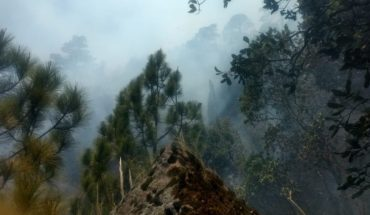 82 wildfires in 21 states, reports Conafor