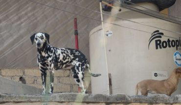 Abuse and abandonment of animals will be punished with even jail