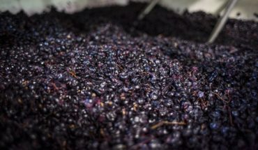 Argentinian vineyards and tourism in Mendoza: those favored with the economic crisis