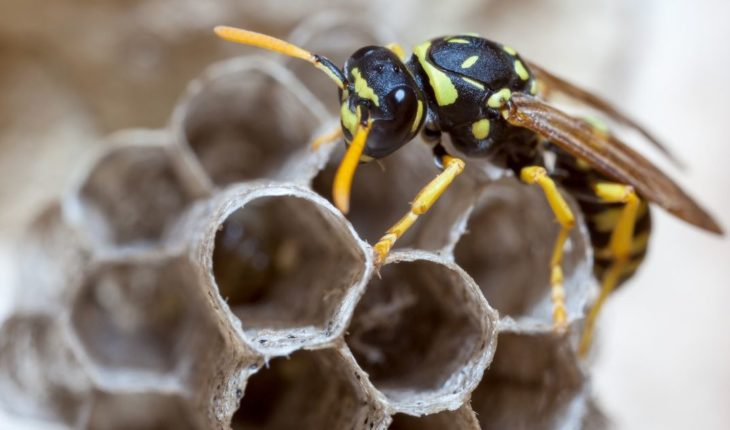 Can insects reason?   Filo News