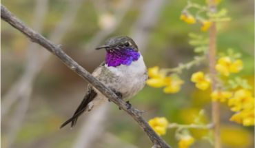 """Launching Plan """"Last shelters"""" after creating protected area for the conservation of the Arica's hummingbird"""